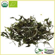 Lightly oxidized White Hair Silver Needle White Tea Best White Tea Brands