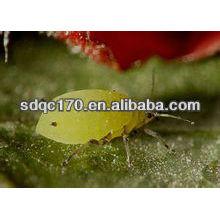 Vender insecticida de acción rápida imidacloprid 97% TC 20% SL 70% WDG