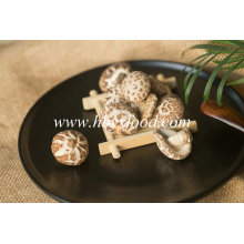Yongxing Food Autumn Plant Brands Tea Flower Mushroom