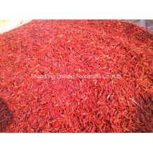 Nouveau piment rouge chaud pour l'exportation