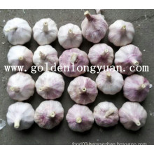 2016 New Season Fresh Garlic