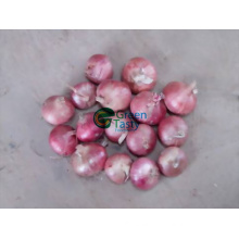 Supply High Quality Frozen Vegetables of Red Onion