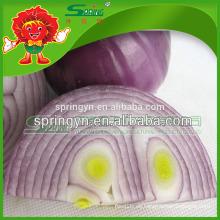 Cebolla roja superventas exportador chino de la cebolla