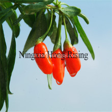 Ningxia Goji Berry Calories