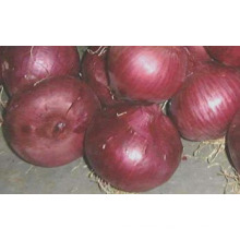 low price fresh red onion