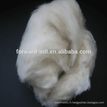 peigné mouton fine laine de cachemire