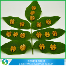 Nut Snack Type natural LH 1/2 - Butterfly - split Chinese light havles walnuts kernels price