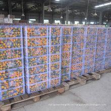 Regelmäßiger Lieferant für frisches Baby Mandarin Orange