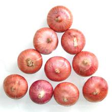 Cebolla roja china