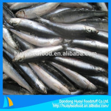 New Landing Fresh Frozen Anchovy For Fish Meal