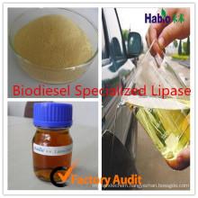 Biodiesel Enzyme Lipase, Industrial Lipase
