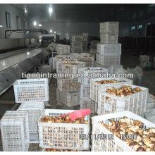 Prix du marché chinois de taro