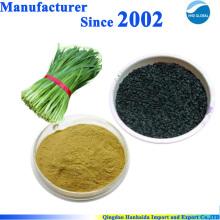 Extrato de semente de alho-poró 100% natural para a saúde do homem