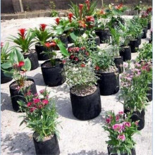 Non Woven Pflanzer wachsen Tasche