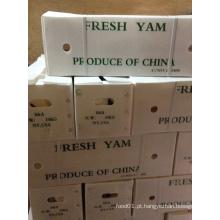 Yam fresco chinês para exportar (diâmetro: 2-3cm)