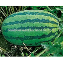 W03 Xinong нет.9 средняя зрелость большой размер арбуз семена для посадки