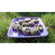 Seta de shiitake suave fresca y saludable
