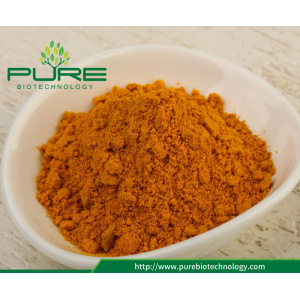 95%25+curcumin+turmeric+root+extract+powder