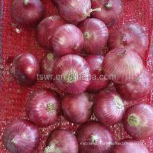 red fresh onion new season onion best quality onions round onion