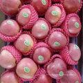 Qualidade superior de maçã Qinguan fresca