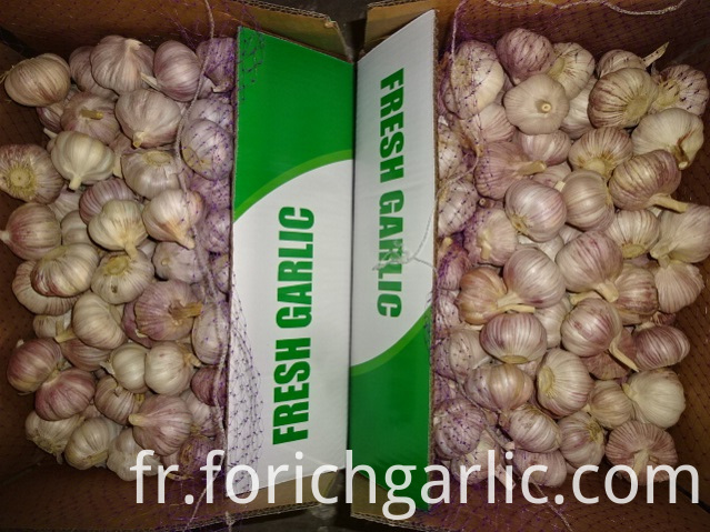 Size 5 0cm Fresh Garlic 2019