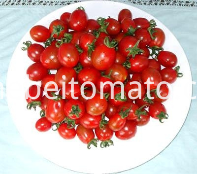 best raw material tomato