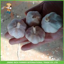Chinês puro fresco branco e alho branco normal de alta qualidade e bom preço 5.5cm saco de malha em 10 kg de cartão