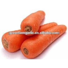 Frische Karottengröße 80-150g Preis