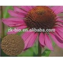 Best selling China Organic Echinacea Extract