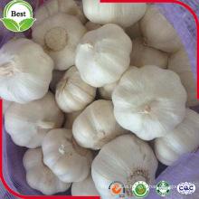 China Shandong Jinxiang nuevo ajo fresco de la cosecha