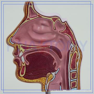 PNT-04361 anatomie de la cavité nasale modèle OEM