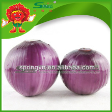 onion exporter in China onion specification fresh red onion