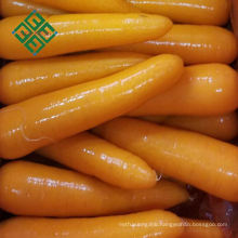 carrot specification fresh carrot for middle east market