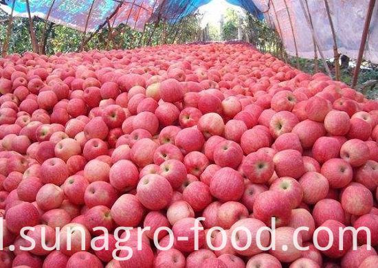 Red Fuji Apple With Good Health And Quality