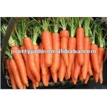 Zanahoria fresca buena