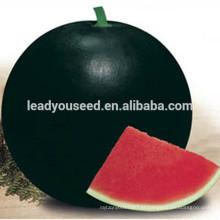 MW02 Hei rodada sementes de melancia híbrido casca preta em sementes de melão