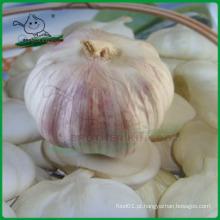 Alho fresco chinês / Alho branco normal / Alho Jinxiang
