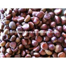 New Crop Dandong Fresh Castanha