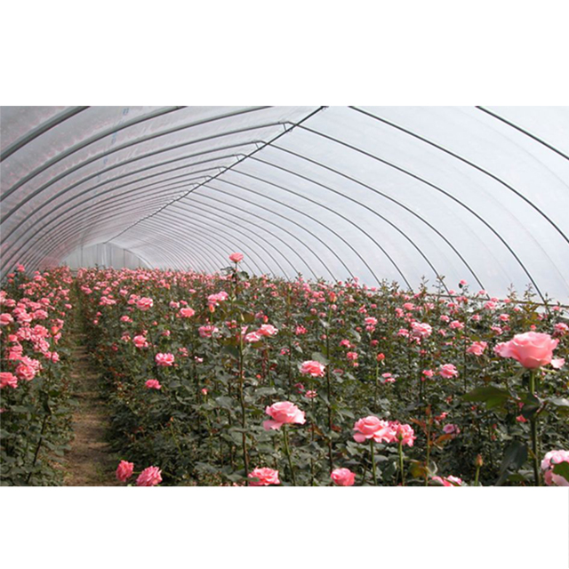 Tunnel-Greenhouse-