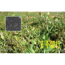Fabrique el germen 100% natural de la semilla de Cowherb de la alta calidad E / la semilla de Cowherb / el extracto del semen de Vaccariae / Vaccariae del semen