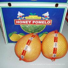 Neue Ernte Frischer Honig Pomelo