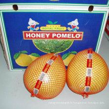 Nouveau Pomelo frais au miel