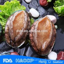 Ursprünglicher Abalone mit Schalenlieferanten