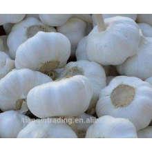 kaufen 2017 neue Ernte chinesischen weißen reinen gefrorenen Knoblauch