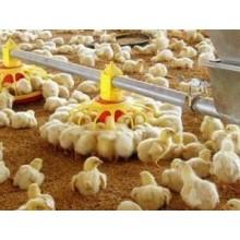 Las aves de corral por mayor de pollo bandeja de alimentador