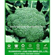 NBR021 Senme Guangzhou brocolli seeds company, semillas en venta