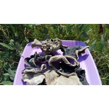 Blanco Back Black Fungus con buena calidad
