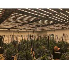 Indoor Full Spectrum LED Strip Lights for Vegetable Herb Flower Grow