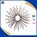 best price Common wire nail Common iron nails