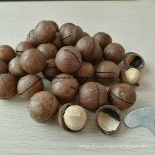New Crop Raw Macadamia Nut in Shell